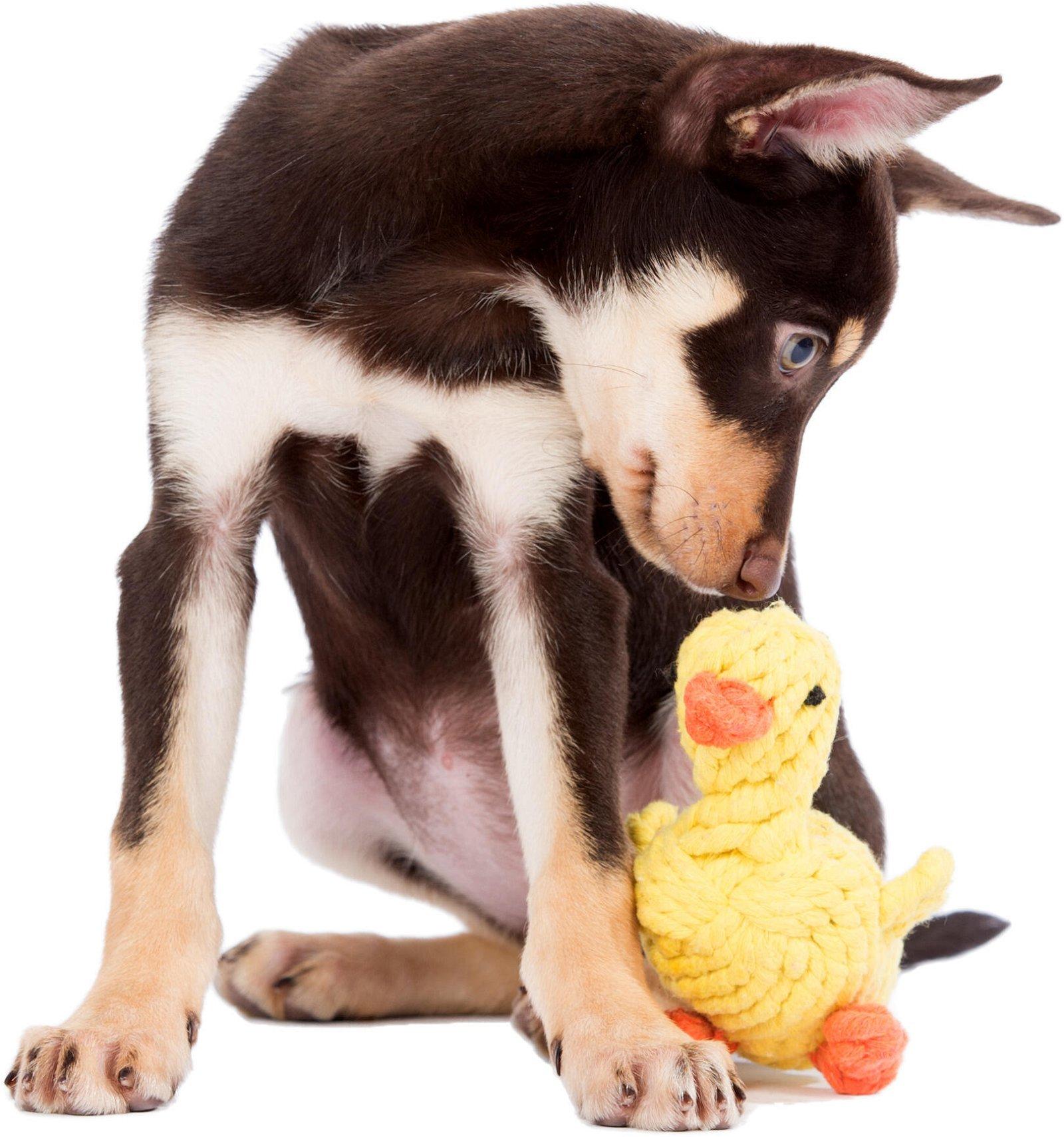 Hundespielzeug Emma Ente aus Baumwolltau - Gelb, zahnpflegend und robust, (B/H/T) 16x16x7 cm