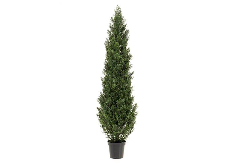 Cedar tree outdorr uv in pot (h) 180cm