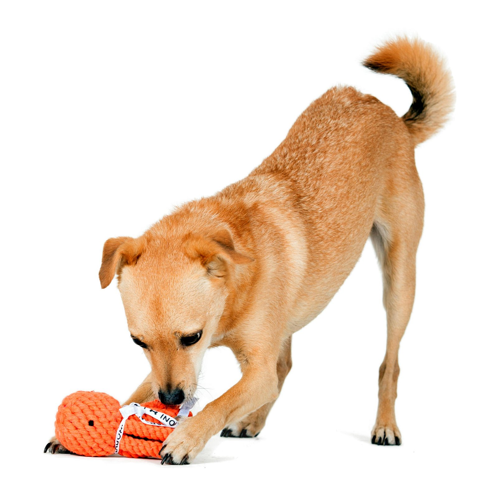 Hundespielzeug Thaddäus Tintenfisch aus Baumwolltau - Orange, zahnpflegend und robust, (B/H/T) 13x7x7 cm