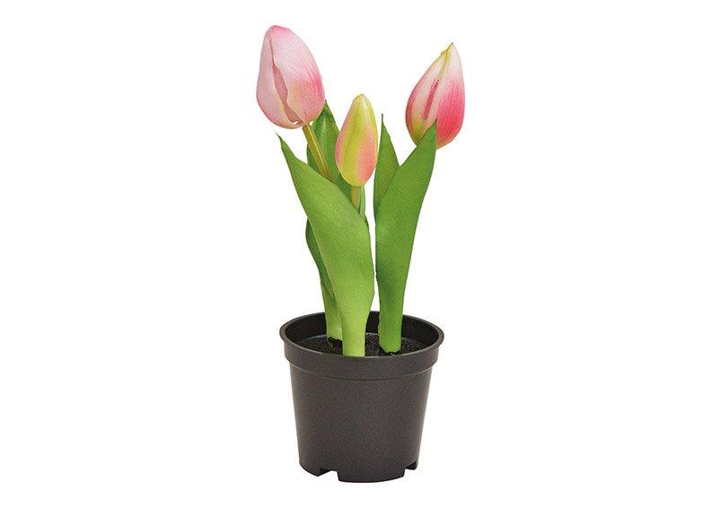 Tulips in pot plastic pink/rose 20,5cm