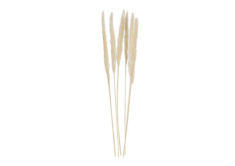 Pampas grass white set of 6, 75cm