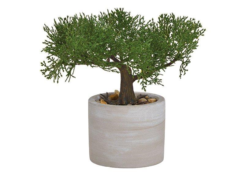 Bonsai im Zement Gefäß aus Kunststoff Grün 2-fach, (H) 18cm