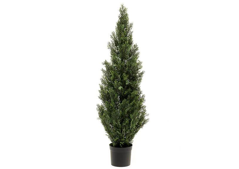 Cedar tree outdorr uv in pot (h) 120cm