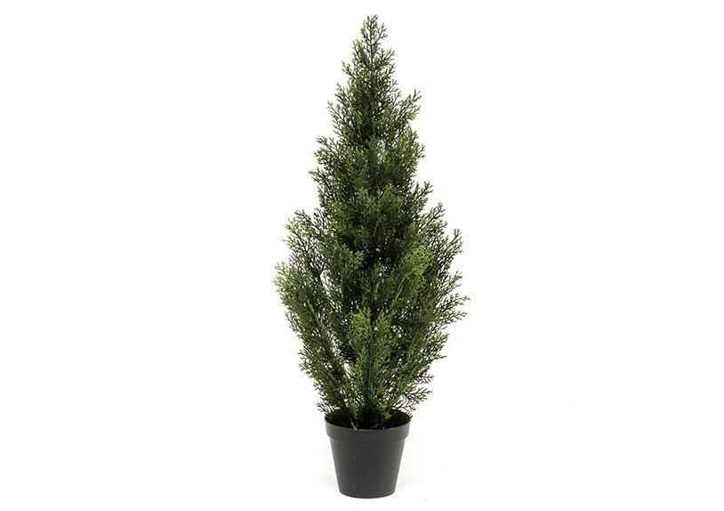 Cedar tree outdorr uv in pot (h) 90cm