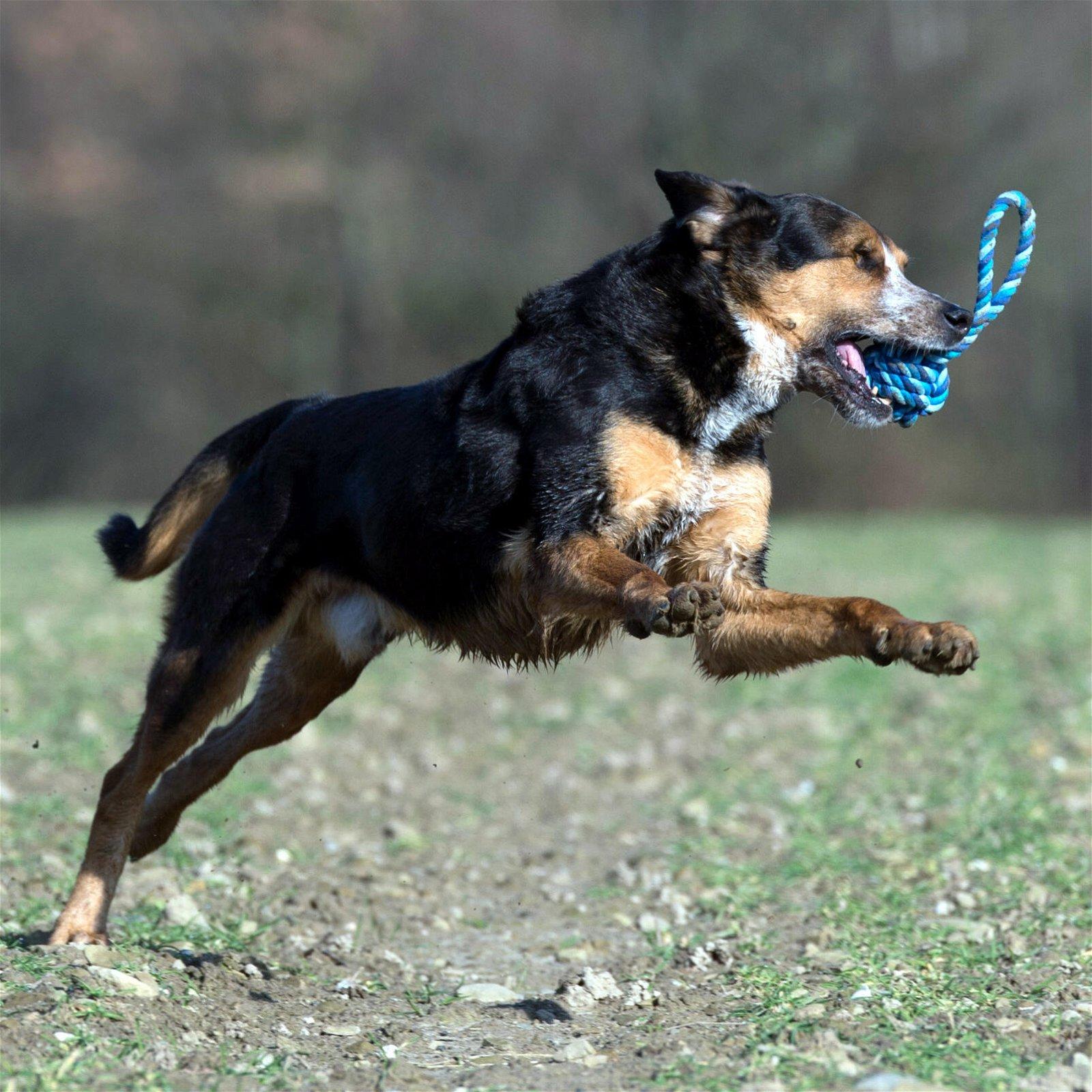 Hundespielzeug Maxi Schleuderball aus Baumwolltau - Blau, zahnpflegend und robust, (B/H/T) 9x9x22 cm