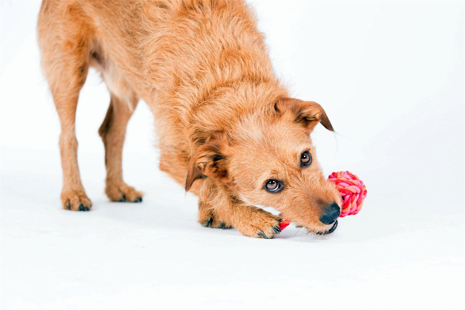 Hundespielzeug Mini Schleuderball aus Baumwolltau - Pink/Rosa, zahnpflegend und robust, (B/H/T) 6x6x13 cm