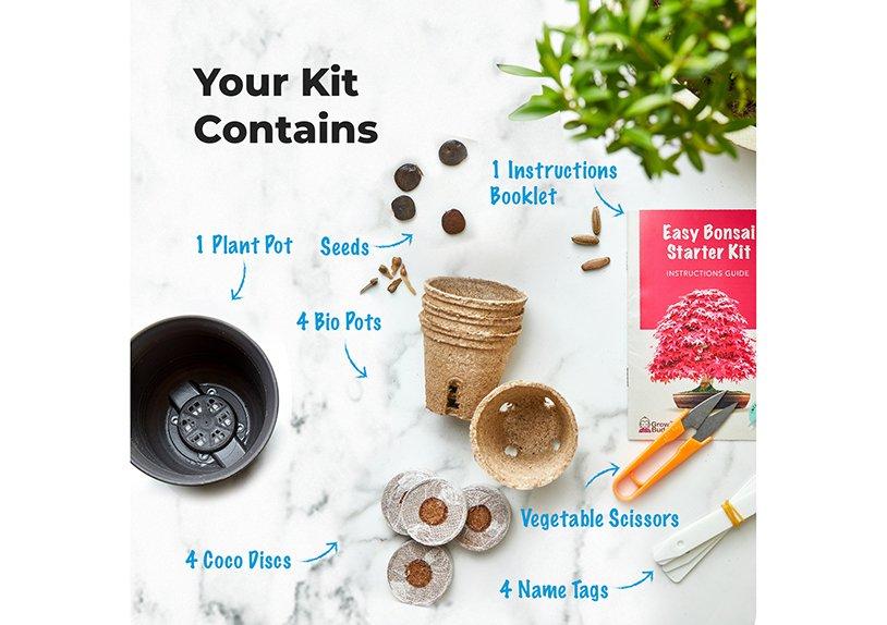 Bonsai Growing Kit, Grow Your Bonsai Starter Kit, with 4 different bonsai species