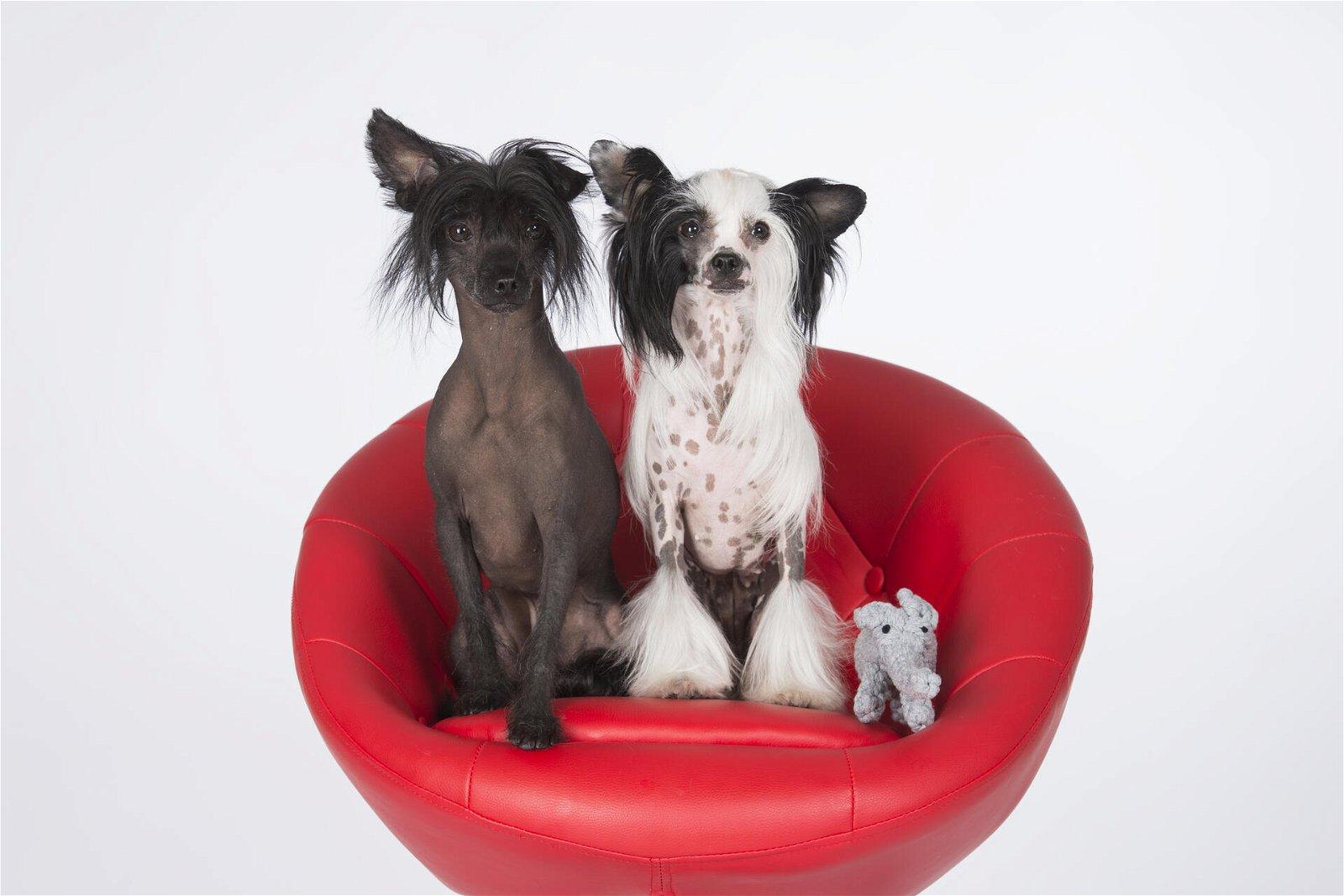 Hundespielzeug Elton Elefant Jr. aus Baumwolltau - Grau, zahnpflegend und robust, (B/H/T) 22x7x9 cm
